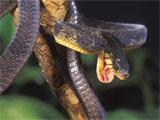 Snake causes printer paper jam