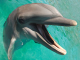 Overweight dolphins put on diet