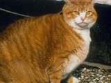 Fat pets compete in slimming contest
