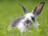 'Rabbit jumping' club launches in UK
