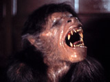 'American Werewolf' to be remade?