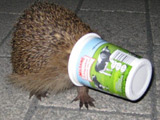 Yoghurt pot hedgehog scares family