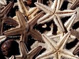 10,000 starfish wash up on Norfolk coast