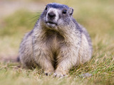 PETA wants animatronic groundhog