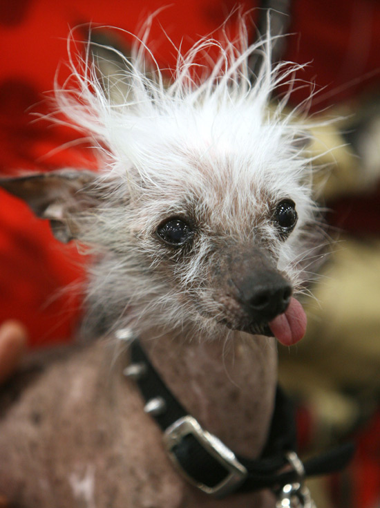 Ugly Dog Pictures